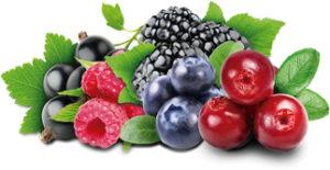 Оптовые продажи ягод в Украине