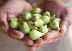 слива какаду - самое большое содержание витамина С